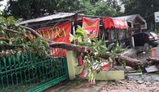 Angin Kencang, Pohon Disejumlah Titik di Pekanbaru Tumbang
