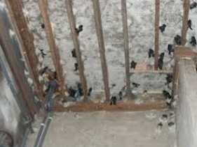 Realisasi Pajak Sarang Burung Walet Dikelola Bapenda Jauh Dari Target