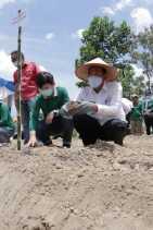 Wali Kota Tanam Bibit Porang di Kelurahan Agrowisata Rumbai Barat