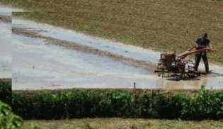 Ratusan Hektare Lahan di Cianjur Terancam Kekeringan