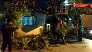 Sikapi Laporan, Dinas PUPR Evakuasi Pohon Tumbang Dari Rumah Warga