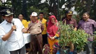 Walikota Pekanbaru Panen Pedet dan Launching Agrotek Farm System
