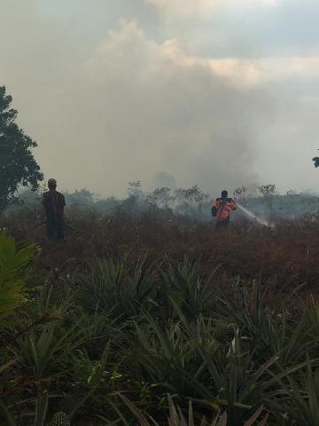 Personil BPBD Riau Berjibaku Padamkan Api
